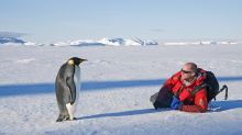 Australia's Antarctic team is hiring for 150 positions