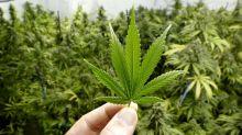 Stock Market Wrap-Up: Buffett Talks Pot, but Here's Who's Buying Marijuana Stock