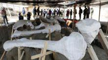 Terrenos de nuevo aeropuerto México emergen como gigantesco cementerio de mamuts