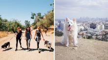 You can now hire a rescue dog for a hike in LA