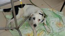 Una perra murió esperando a quienes la abandonaron en el aeropuerto de Bucaramanga