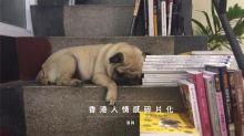 香港人情感碎片化
