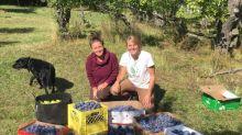 2 birds with 1 stone fruit: Kooteney fruit pickers feed needy families and keep bears away