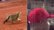 Baseball Blunders: Cat Crashes Yankee Stadium, Praying Mantis Sits Atop Nationals Player's Hat