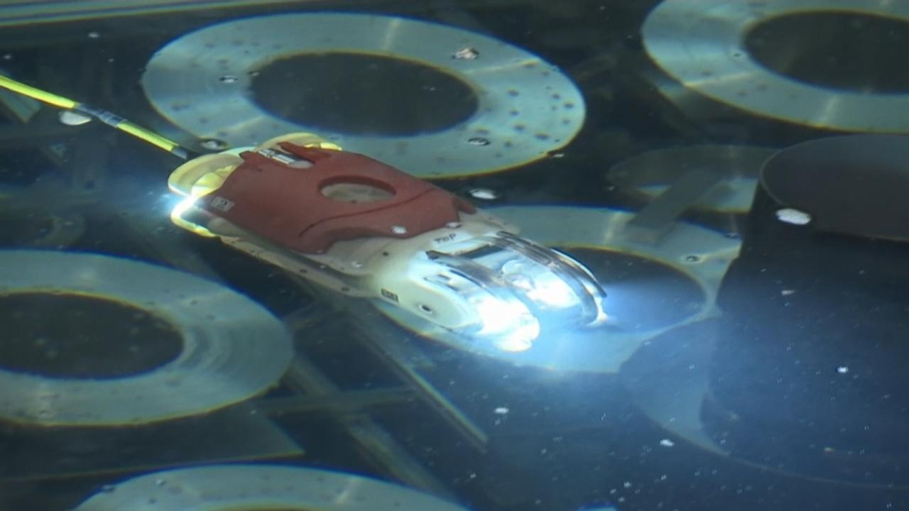 Good Morning America Robot : Swimming robot probes fukushima reactor to find melted