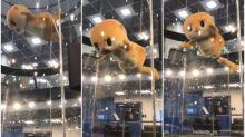 【新片速報】日本自虐吉祥物跳樓 凌空飛盪Twitter熱傳