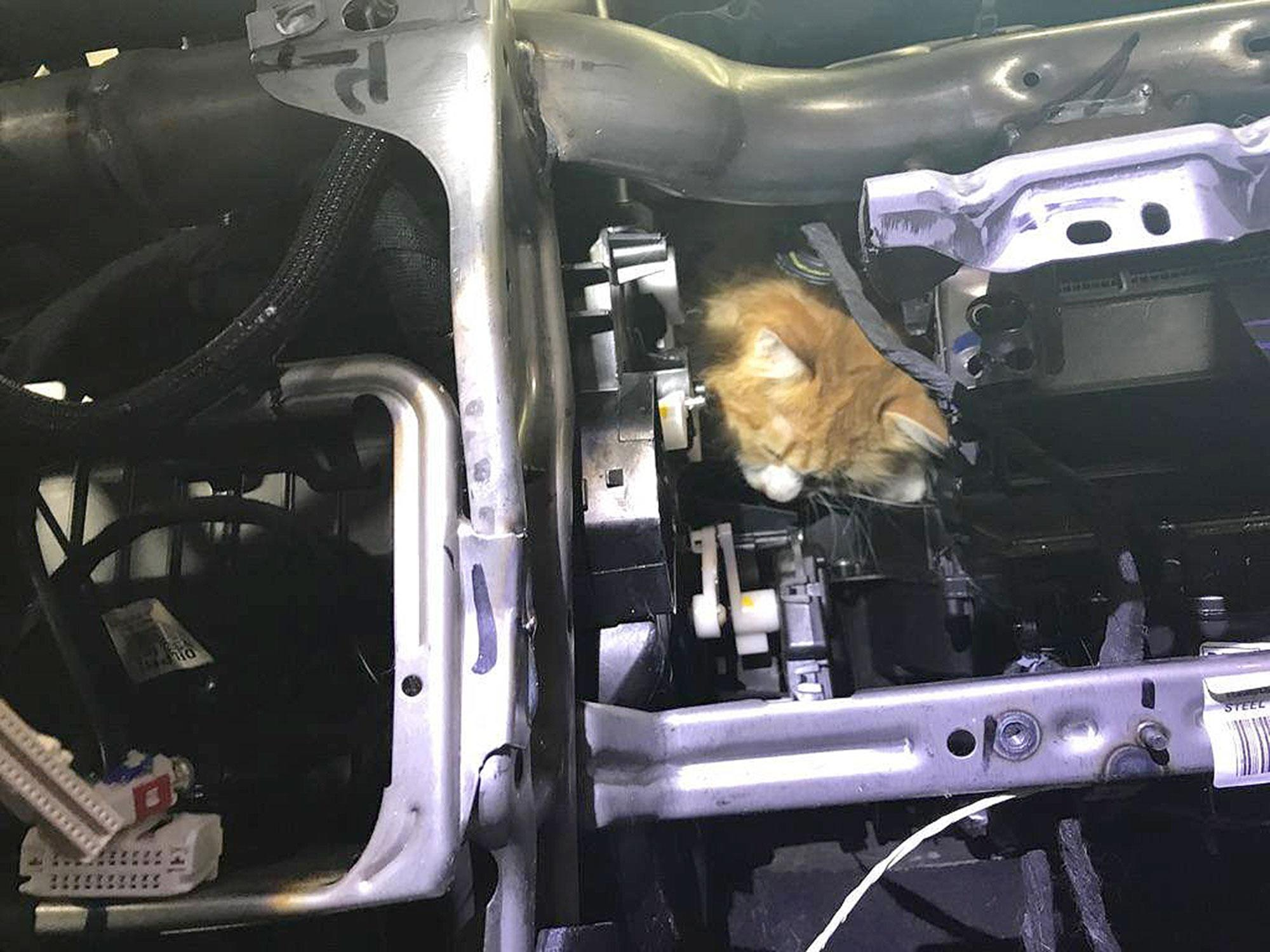Photos Rescuers Work Together To Help Cat Stuck In Suv