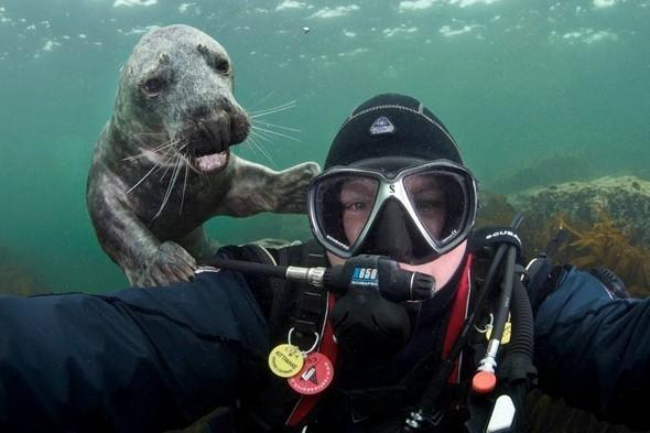 <p>Diver Alex Mustard got the perfect picture after a super-cute smiling seal photobombed his underwater snap off the coast of Northumberland.</p>  <p></p>