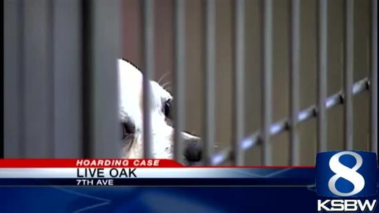 Officials seize dozens of Chihuahuas in Watsonville