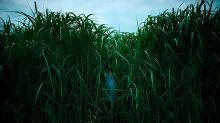 Tráiler | En la hierba alta, la película de Stephen King que aterrorizará a los usuarios de Netflix