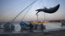 After oil spill, Israel's fishermen net catch despite ban