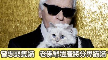 老佛爺都係貓奴 曾經想娶隻貓?