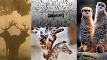 2017 Year in Pictures: Animals
