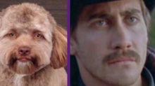 Nuevo reto viral: ¿A qué estrella se parece este perro?