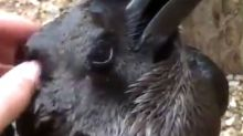 RABBIT OR RAVEN? The Latest Optical Illusion To Pit Friend Against Friend