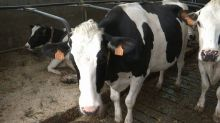 Accordo Parmalat Coldiretti Campania per ritiro latte a 0,43 a L