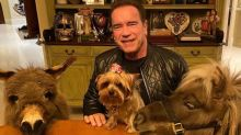 """Como Arnold Schwarzenegger se tornou o maior """"pai de pet"""" da quarentena"""
