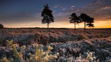 10 reasons why your family must visit New Forest this year