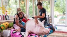 Esther, celebrity 'wonder pig,' diagnosed with cancer after CT scan
