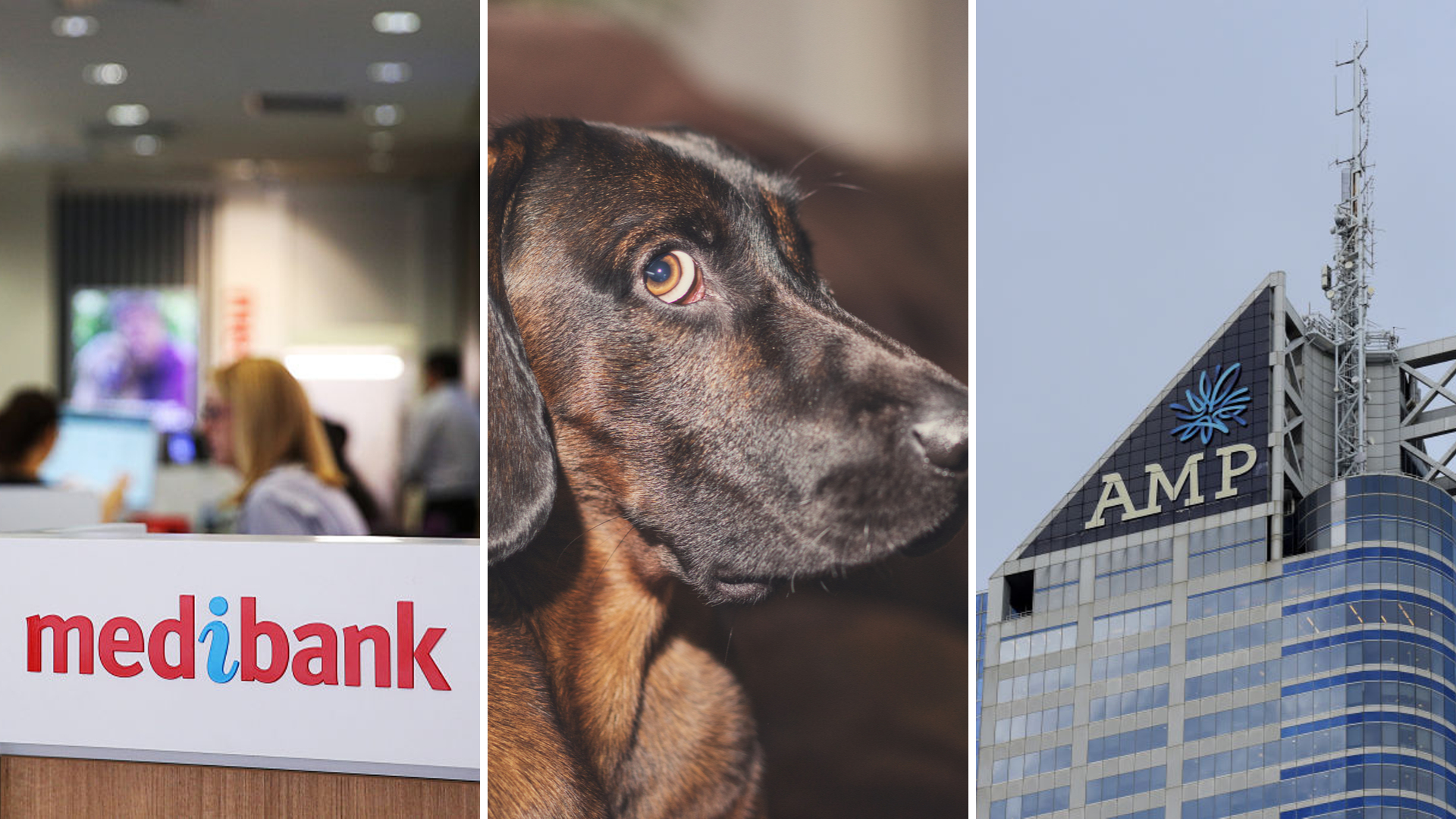Medibank, AMP Super, pet insurance: Three products Australians shouldn't buy