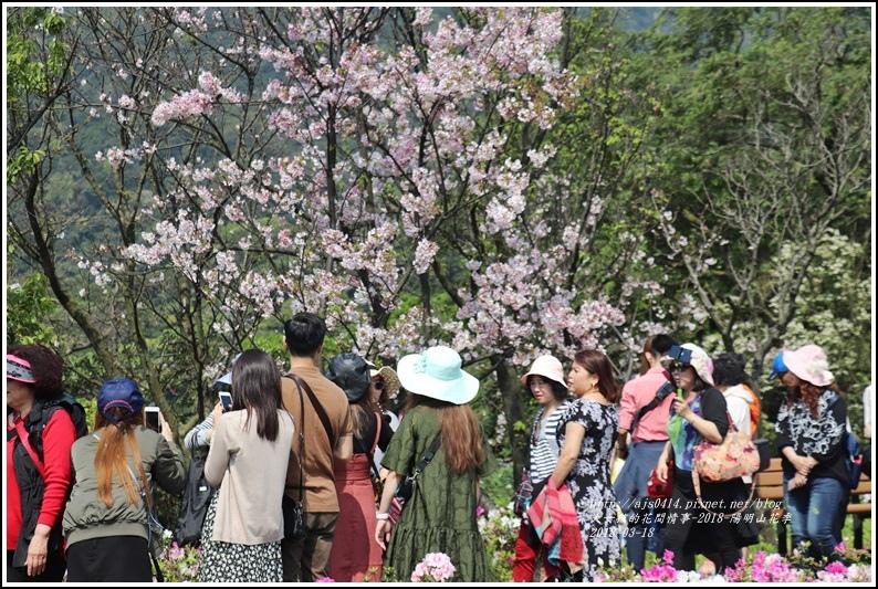 陽明山櫻花季-2018-03-07.jpg