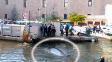 Marseille : une baleine dans le Vieux-Port