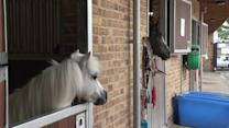 Club builds tiny horse lower door to see the world