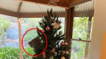 Aussie woman's adorable find hidden in Christmas tree