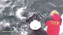 Humpback Duo Have Whale Of A Time Checking Out Whale Watchers