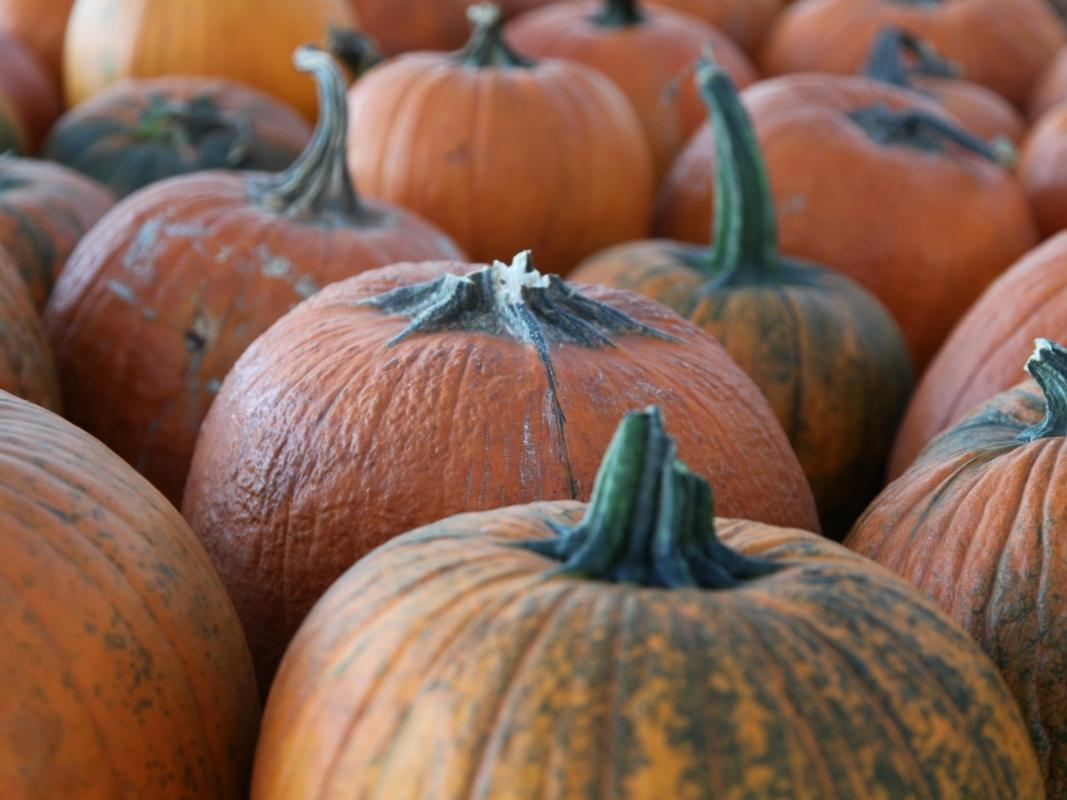 A growing list of the best Yorkville-Area pumpkin patches for 2020.