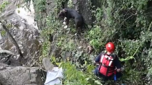 Firefighter rappelling down waterfall to rescue dog is captured on video