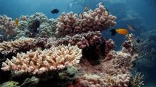 Unsustainable fishing worsens threats to Great Barrier Reef