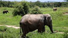 Thai refuge warns of growing risks to animals as pandemic bites