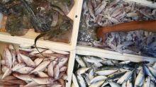 Sea sand mining off Selangor, Perak reducing catch, says Fisheries Dept chief
