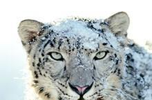 Apple is giving away Snow Leopard to MobileMe customers