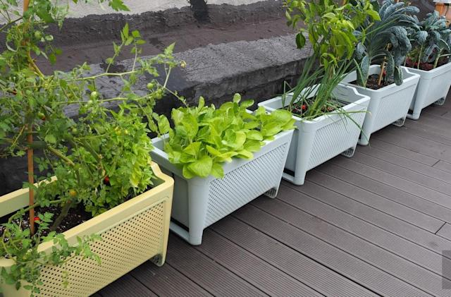 The Grow connected planter is the ultimate no-fuss gardening kit