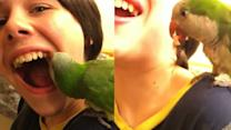 Video Shows Parrot Pulling Tooth
