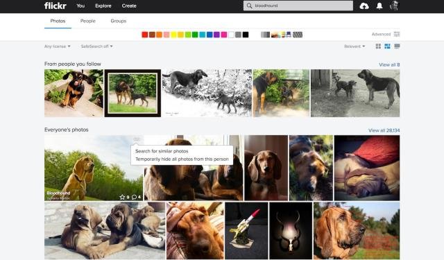 Finding the dog pictures you want on Flickr just got easier