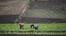 La agricultura en Latinoamérica y el Caribe y las claves para su futuro