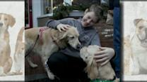 Dogs Comfort Newtown; 'Twitten' Made for Couples