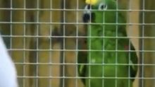 Wildlife park parrot performs Beyonce's If I Were A Boy