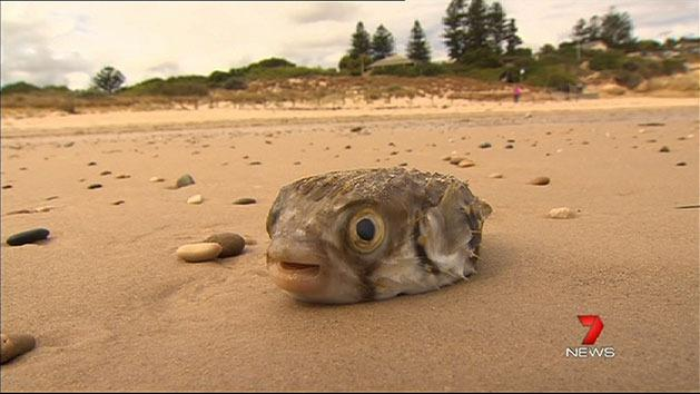 Locals fed up with dead fish