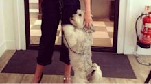 BGT's Ashleigh reveals her dog Pudsey has died