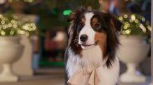 «Show Dogs – Entriamo in scena» - La clip IN ESCLUSIVA