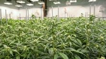 The Best Marijuana Investment Could Be a Beer Stock