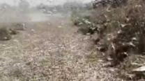 Swarms of Locusts Trigger State of Emergency in Southern Russia