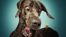 Fotógrafo faz imagens divertidas de cães abocanhando petiscos no ar