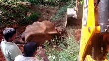 Indian officials rescue elephant that fell into roadside ditch
