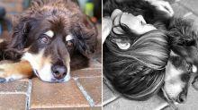 Couple devastated after beloved dog's body stolen in vet freezer robbery