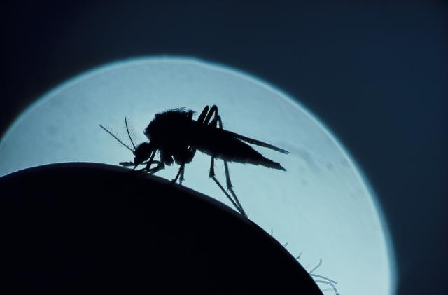 The mRNA tech we used against COVID could help us finally beat malaria